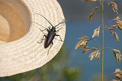 Beetle on straw hat - p1437m2107334 by Achim Bunz
