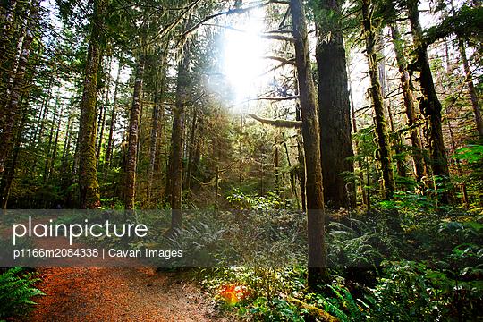 p1166m2084338 von Cavan Images