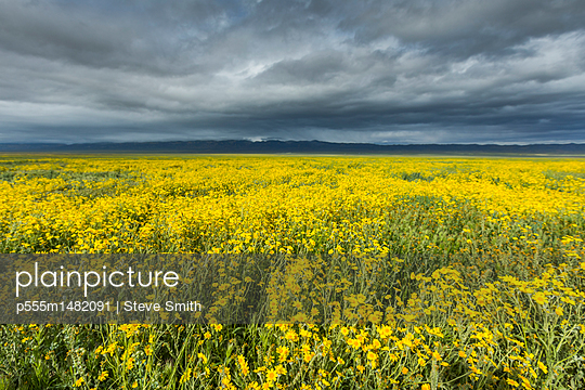 Yellow flowers in field under clouds