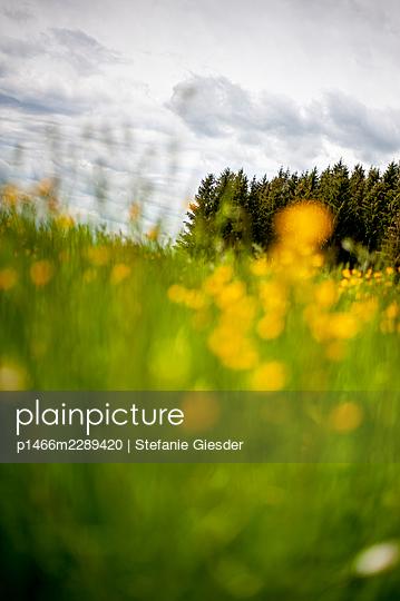 Summer meadow - p1466m2289420 by Stefanie Giesder