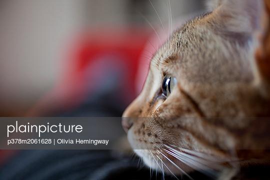 p378m2061628 von Olivia Hemingway