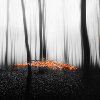 Twig - p1696m2294470 by Alexander Schönberg