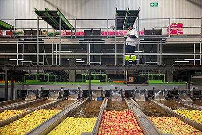 Worker checking apple washing process - p300m2023721 von zerocreatives
