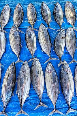 Fish for sale in market, Kumarakanda, Sri Lanka - p343m1144858 by David Santiago Garcia
