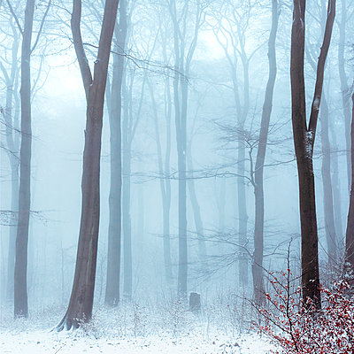 Fog in snowcapped winter forest - p300m1505808 by Dirk Wüstenhagen