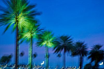 Palmen in abendlichem Kunstlicht  - p719m2151507 von Rudi Sebastian