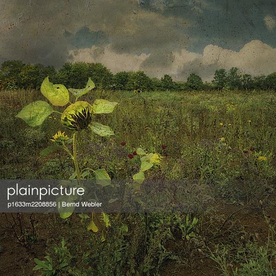 Vague Memories - p1633m2208856 by Bernd Webler
