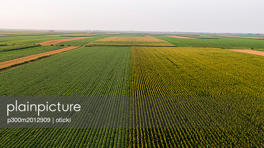 Serbia, Vojvodina, Aerial view of corn, wheat and soybean fields in the late summer afternoon - p300m2012909 von oticki