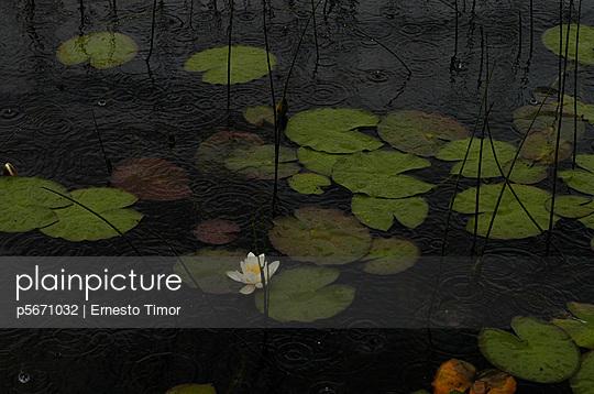p5671032 von Ernesto Timor
