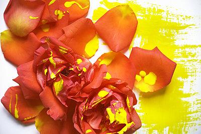 Paint it yellow - p1054m2044832 by Maria Kazvan