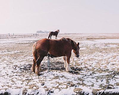 Pferd auf Pferd - p1085m880897 von David Carreno Hansen