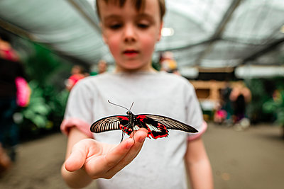 Curious boy holding butterfly - p1166m1577330 by Cavan Images