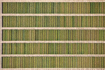 Full frame shot of agricultural field, Hohenheim, Stuttgart, Baden-Wuerttemberg, Germany - p301m1406267 by Stephan Zirwes