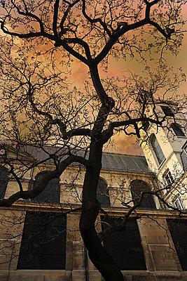 Stucco - p6010063 by Alain Caste