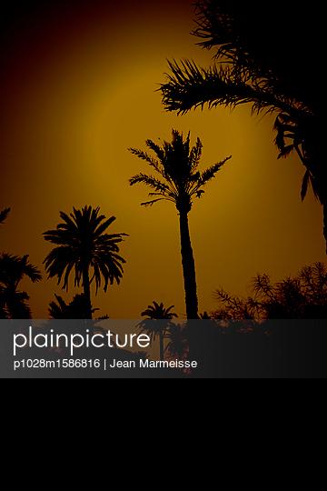 Palm trees, Marrakesh, Morocco - p1028m1586816 von Jean Marmeisse