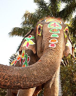 Bemalter Elefant - p1092m1112960 von Rolf Driesen
