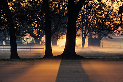 Trees in the Morning Mist - p1100m2090931 by Mint Images