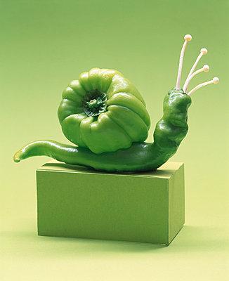 Grüne Schnecke - p1115m890236 von Nikolai Buroh