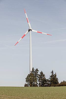Windrad und Baumgruppe - p893m2021683 von Thomas Ebert