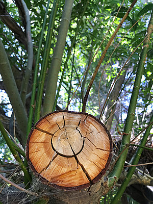 Rebirth of a fallen tree - p1048m2025575 by Mark Wagner