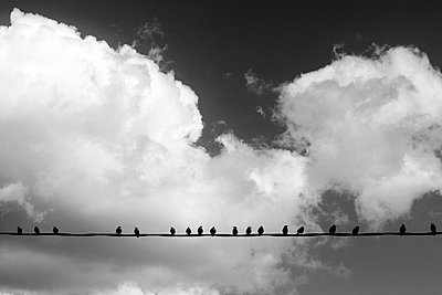 The bird line - p1245m1069373 by Catherine Minala
