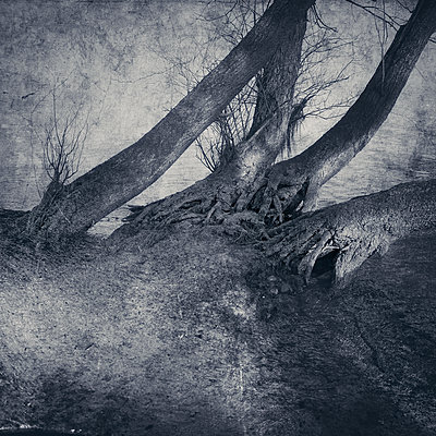 Trees at the - p1633m2211122 by Bernd Webler