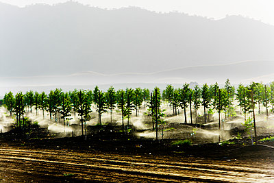Sprinklers watering a orchard of young trees. - p343m1554750 by Ron Koeberer