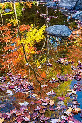 Fall colors reflect in a river in Maine - p1166m2094318 by Cavan Images