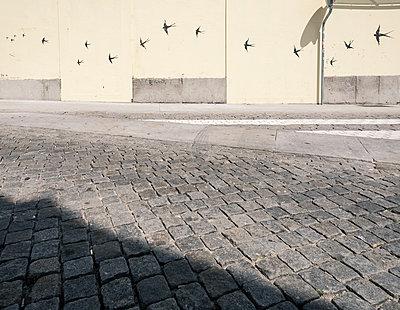 Schwalben - p1542m2175051 von Roger Grasas