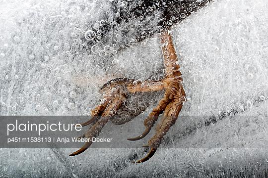 Eingefrorene Vogelkrallen - p451m1538113 von Anja Weber-Decker