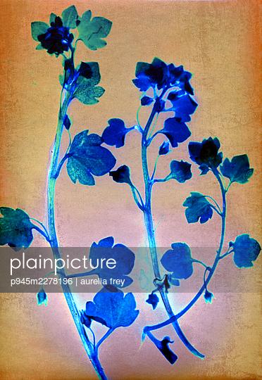 Pressed flowers - p945m2278196 by aurelia frey