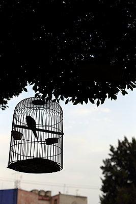 Parrot in birdcage - p1063m1538370 by Ekaterina Vasilyeva