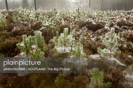 p840m2075569 von SCOTLAND: The Big Picture
