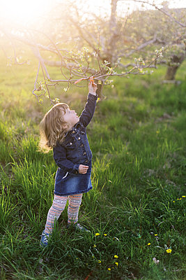 Little toddler girl on a walk in an orchard. - p1166m2190655 by Cavan Images