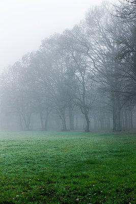 Herbstnebel am Waldrand - p248m1104505 von BY
