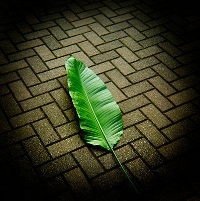 Leaf on cobbblestone street - p3720334 by James Godman