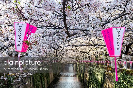Meguro River during cherry blossom time, Tokyo, Japan - p871m2113616 by Jordan Banks