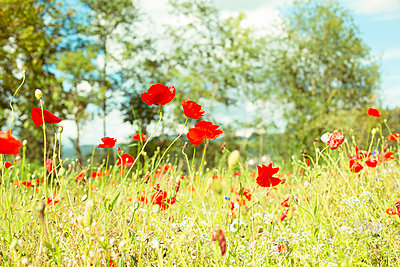 Flower meadow - p432m917772 by mia takahara