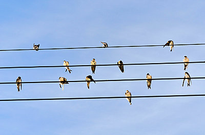 Birds sitting on the power supply lines - p8850214 by Oliver Brenneisen