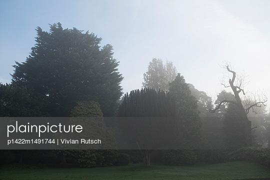 Park in der Morgendämmerung - p1422m1491744 von Vivian Rutsch