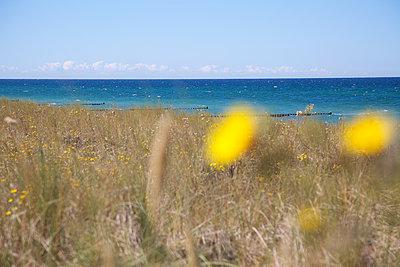 Küstenlandschaft - p606m1481444 von Iris Friedrich