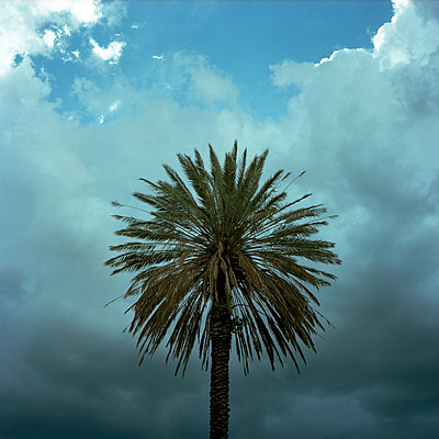 Palm tree with dark clouds - p1160m951388 by Emilie Reynaud