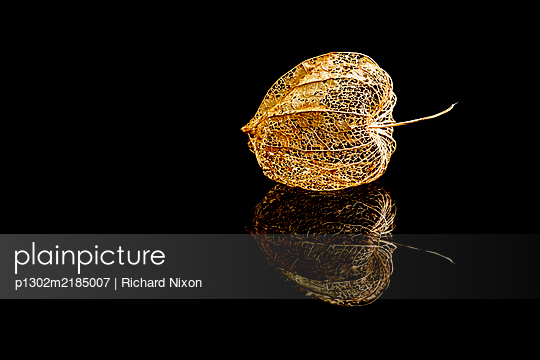 Physalis on a black reflective surface - p1302m2185007 by Richard Nixon