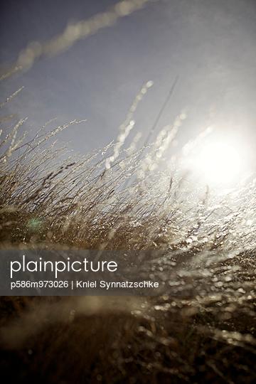 Blick durch Schilfgras in den Himmel - p586m973026 von Kniel Synnatzschke