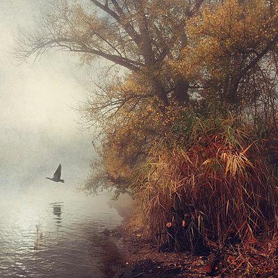 Autumn Wings - p1633m2222140 by Bernd Webler