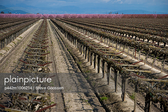 Agriculture  - p442m1006214 by Steve Goossen