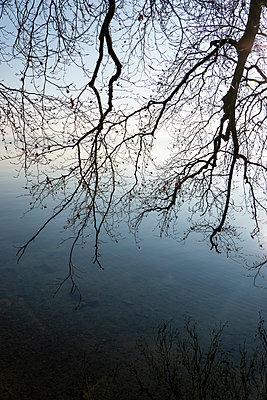Zweige neigen sich über den Starnberger See - p1657m2272057 von Kornelia Rumberg