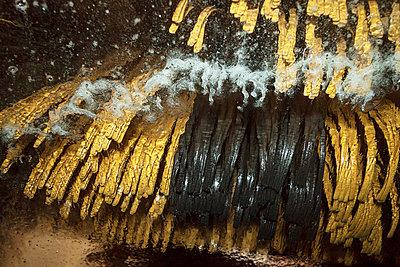 Car wash - p739m740227 by Baertels