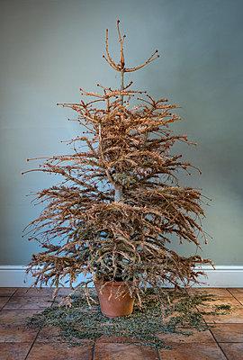Trister Weihnachtsbaum - p1057m2185610 von Stephen Shepherd