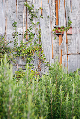 Wall covered with Vegetation and Fabric - p1307m2152804 by Agnès Deschamps
